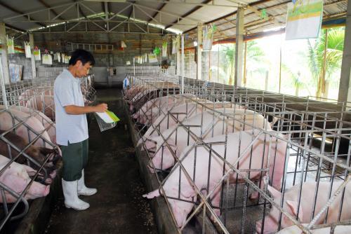 Tăng cường khả năng hợp tác với Pháp trong  pt chăn nuôi lợn tại Việt Nam